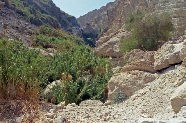 En Gedi rocks